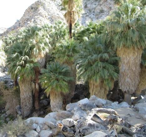 49 Palms Oasis Joshua Tree 2-2014