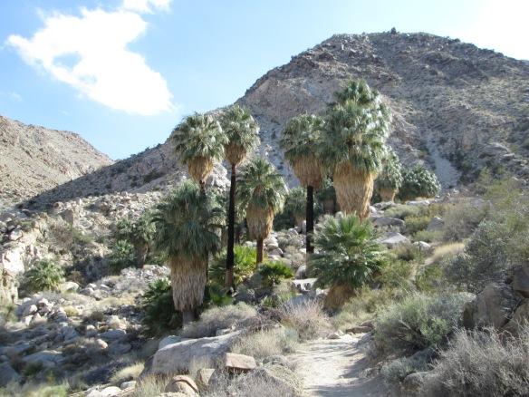 Approaching 49 Palms Oasis Joshua Tree 2-2014
