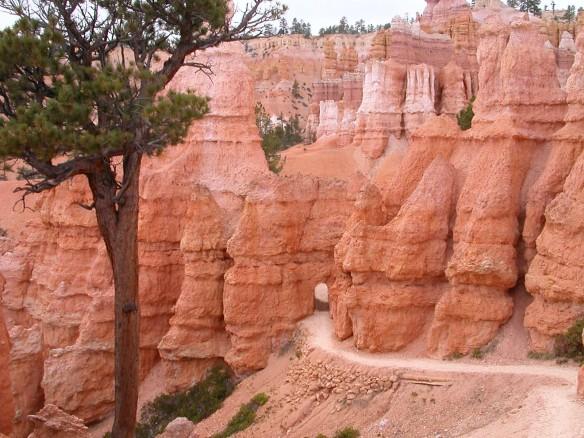 Bryce doorway with pine