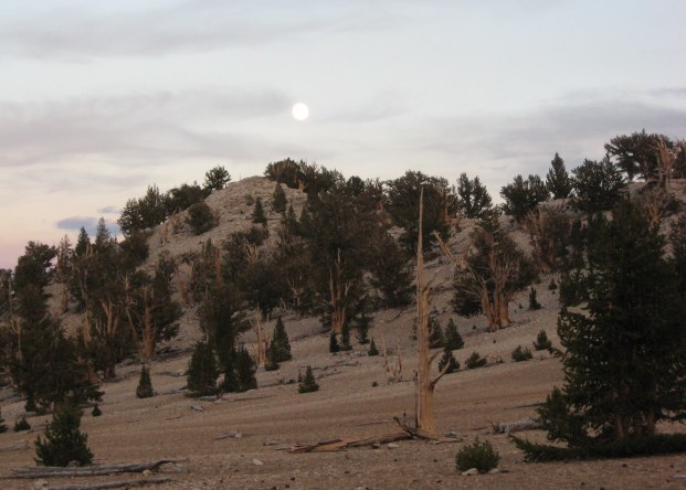 Moonrise at Patriarch Grove White Mountains 9-2015