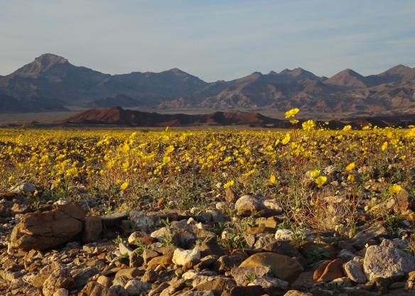 Desert gold landscape at sunset 2-2016