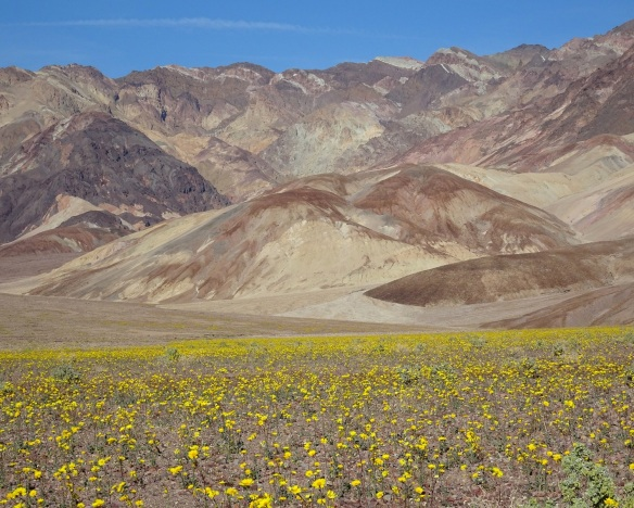 Mountain view 1 with desert gold Death Valley 2-2016 smaller