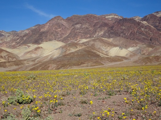 Mountain view 2 with desert gold Death Valley 2-2016 smaller