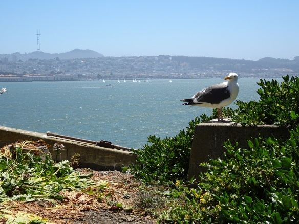 Western gull and SF skyline 6-2016 smaller