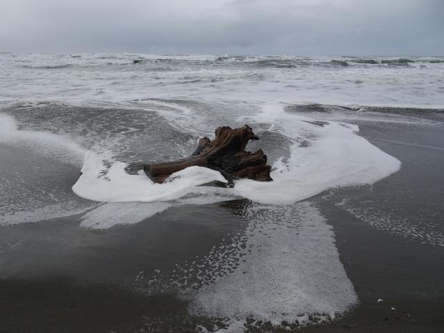 redwood-stump-at-humboldt-beach-1-2017-small
